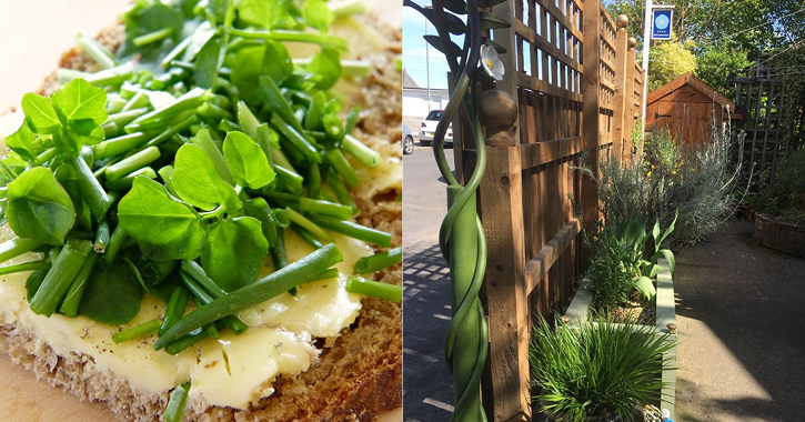 egg and chive sandwich with Polemonium Plantery
