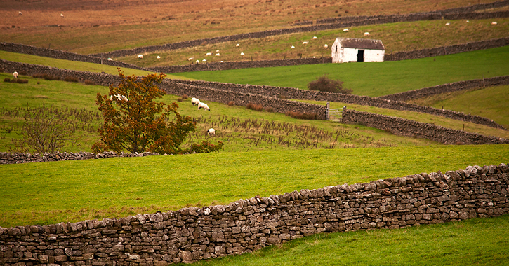 view of the countyside during autumn in Upper Teesdale in the Durham Dales
