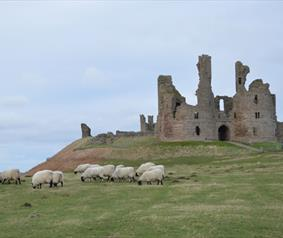 Attractions to visit, Dunstanburgh Castle - Northern Saints Trails
