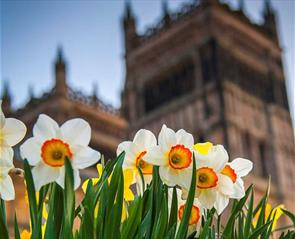 Daffodils outside Durham Cathedral