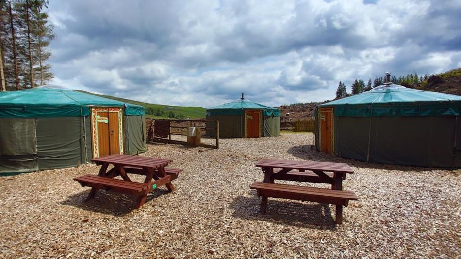 Lapwing, Plover and Curlew Yurts at Killhope