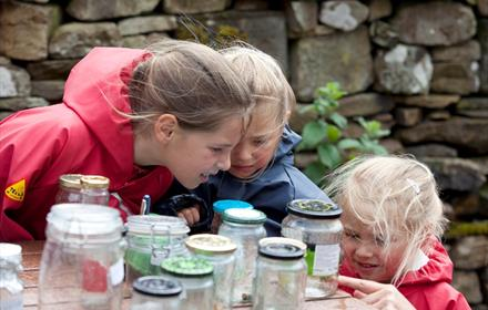 Bowlees Visitor Centre - Discovery Club: Its Sticky!