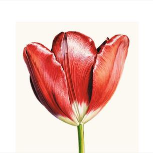 Turkish Tulips exhibition at The Bowes Museum, Durham