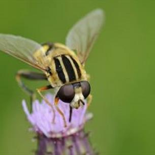 Bowlees Visitor Centre - Discovery Club:  Funky flowers and buzzing bees