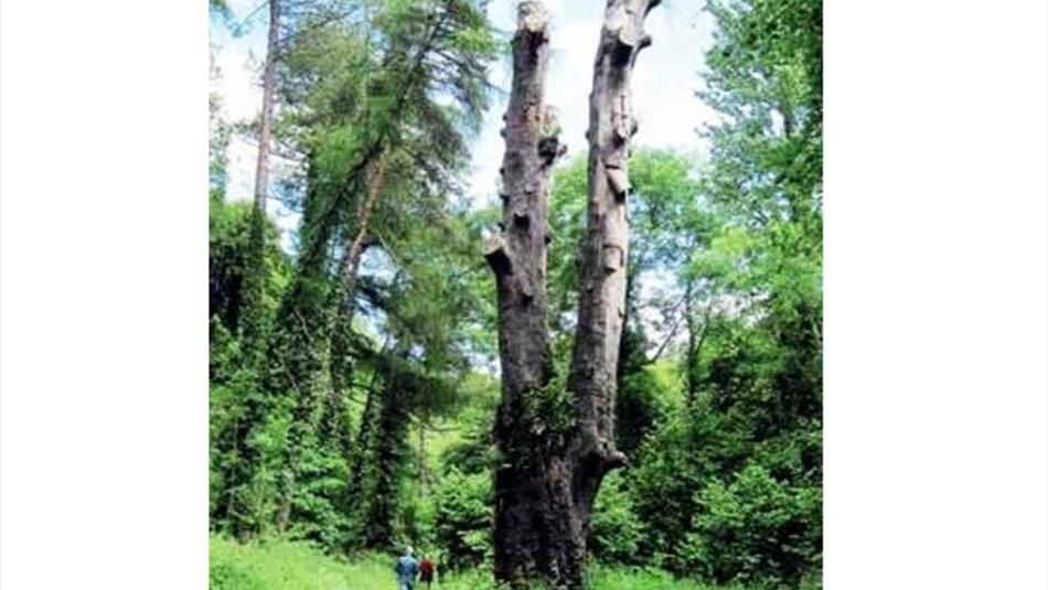 Castle eden dene the yew tree walk walking route in for Eden hill walk in