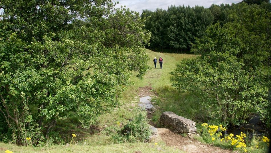 Bowlees Visitor Centre - Guided Walk: Tees riverside ramble