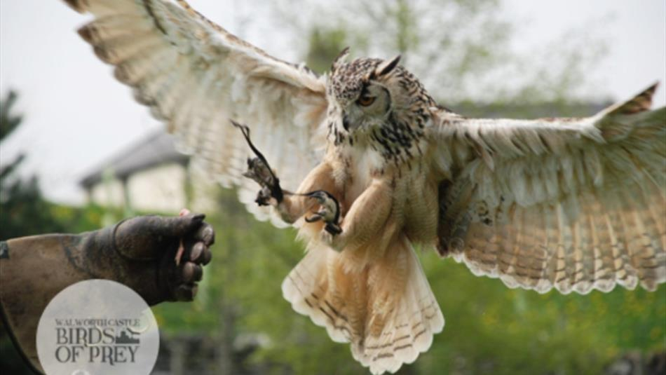 Walworth Castle Birds of Prey Experiences