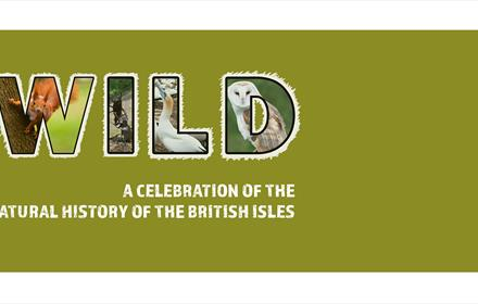Exhibition: Wild - A Celebration of the Natural History of the British Isles